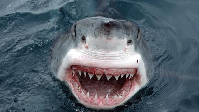 maui-shark-attack